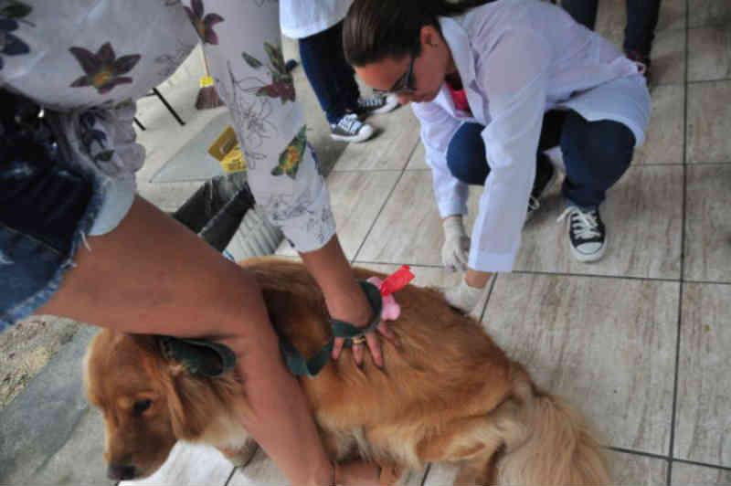 Segunda etapa da vacinação antirrábica acontece em Volta Redonda e Barra Mansa, no RJ