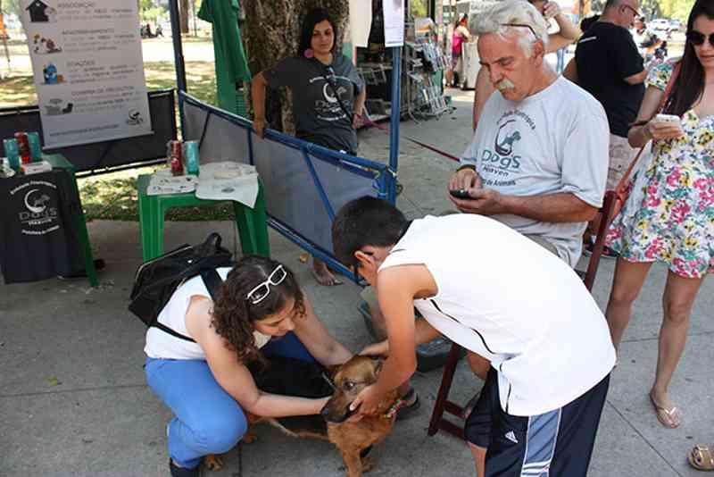 ONGs e protetores podem se cadastrar para evento permanente de doação de animais em Itaipava, Petrópolis, RJ