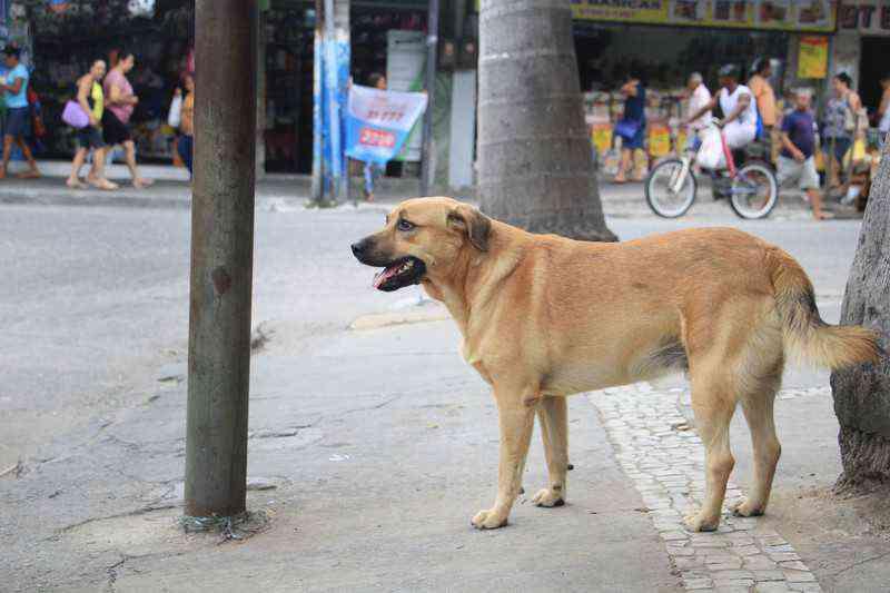 Centro de Controle de Proteção Animal de São Gonçalo (RJ) não saiu do papel