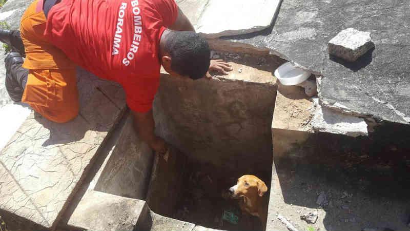 Cão vira-lata fica preso em tubulação de esgoto e é resgatado por Bombeiros em Boa Vista, RR