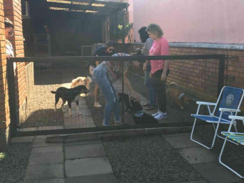 Focinho Amigo visa conscientizar a adoção de animais em Nova Petrópolis, RS