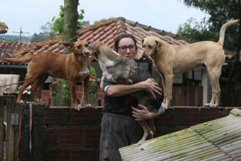 Resgate de cães ainda supera número de adoções em Santa Cruz do Sul, RS