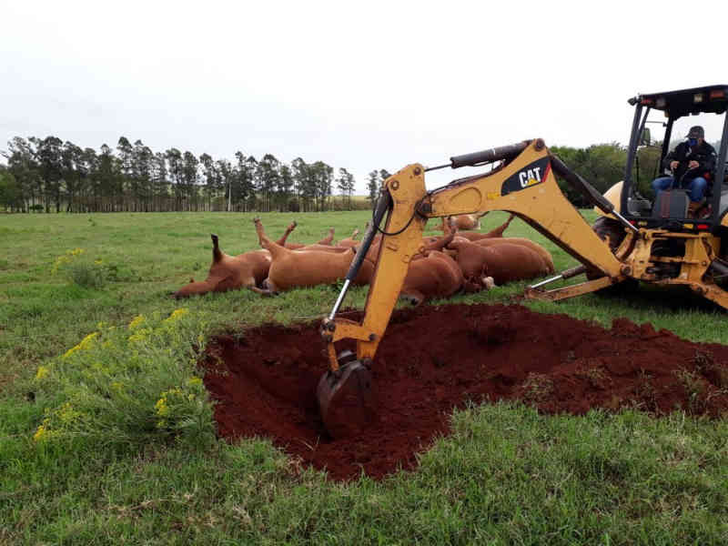 Produtores enterram 18 vacas mortas após queda de postes durante temporal no RS
