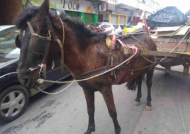 Carroceiro é preso após denúncia de maus-tratos a cavalo em Tramandaí, RS