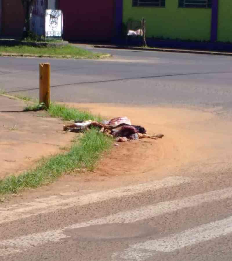 Estância Velha (RS) amanhece com animal morto em possível ritual