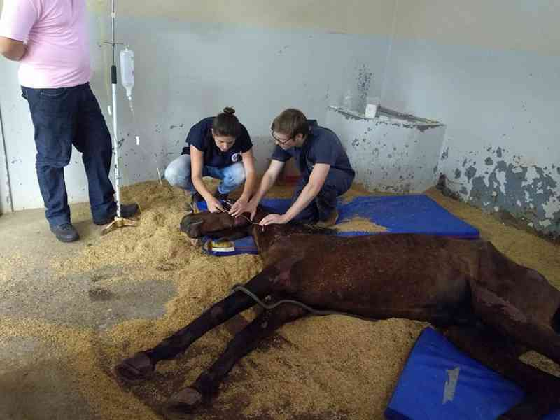 SMMA resgata cavalo que sofria maus-tratos em Esteio, RS