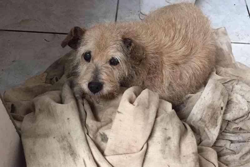 Polícia Civil investiga suposto estupro de cachorro em Santa Cruz do Sul, RS