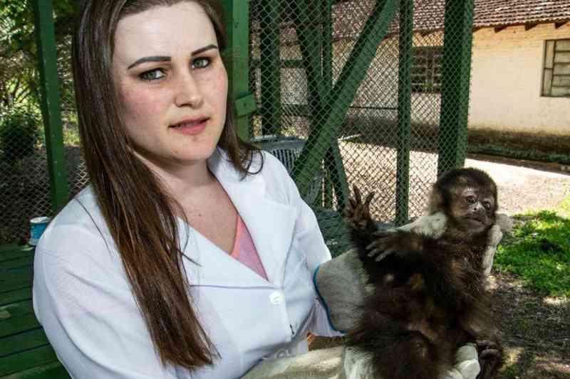 Macaco morre e outro fica ferido no Acesso Grasel, em Santa Cruz do Sul, RS