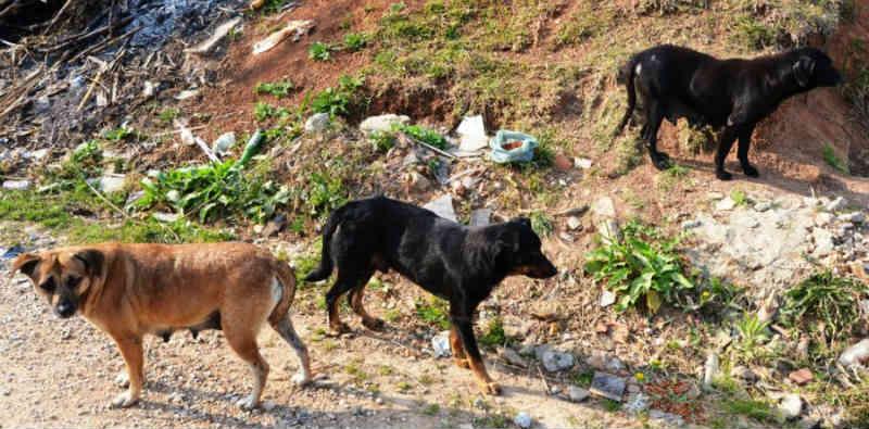 Secretário de Vacaria (RS) diz que denúncias de maus-tratos de animais seguem sendo feitas aos órgãos de segurança