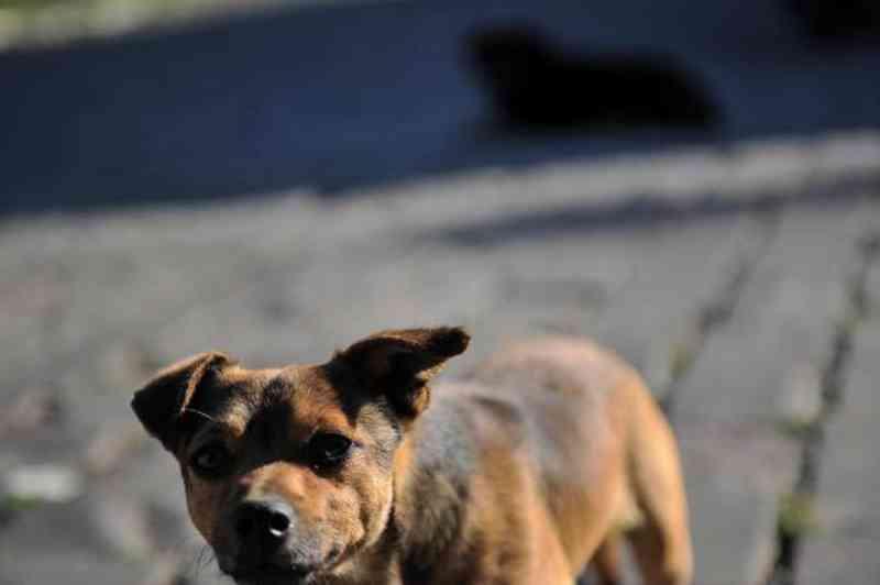 Vacaria (RS) sanciona lei para punir quem maltrata animais