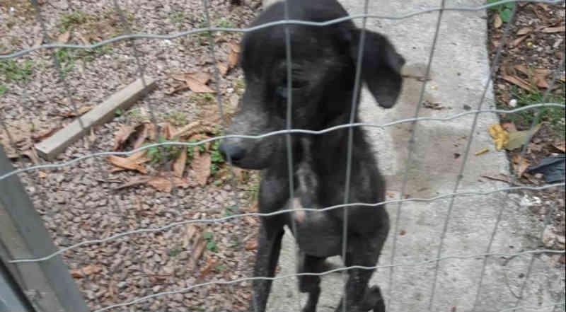 Cão é encontrado desnutrido e em carne viva por causa de sarna, em Araranguá, SC