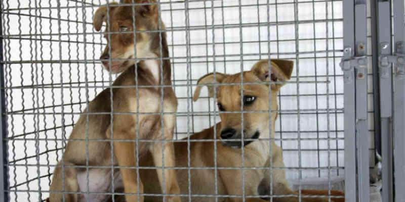 Balneário Camboriú (SC) investe em proteção animal