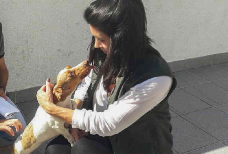 Balneário Camboriú (SC) ganhará programa 'Abraço Animal'