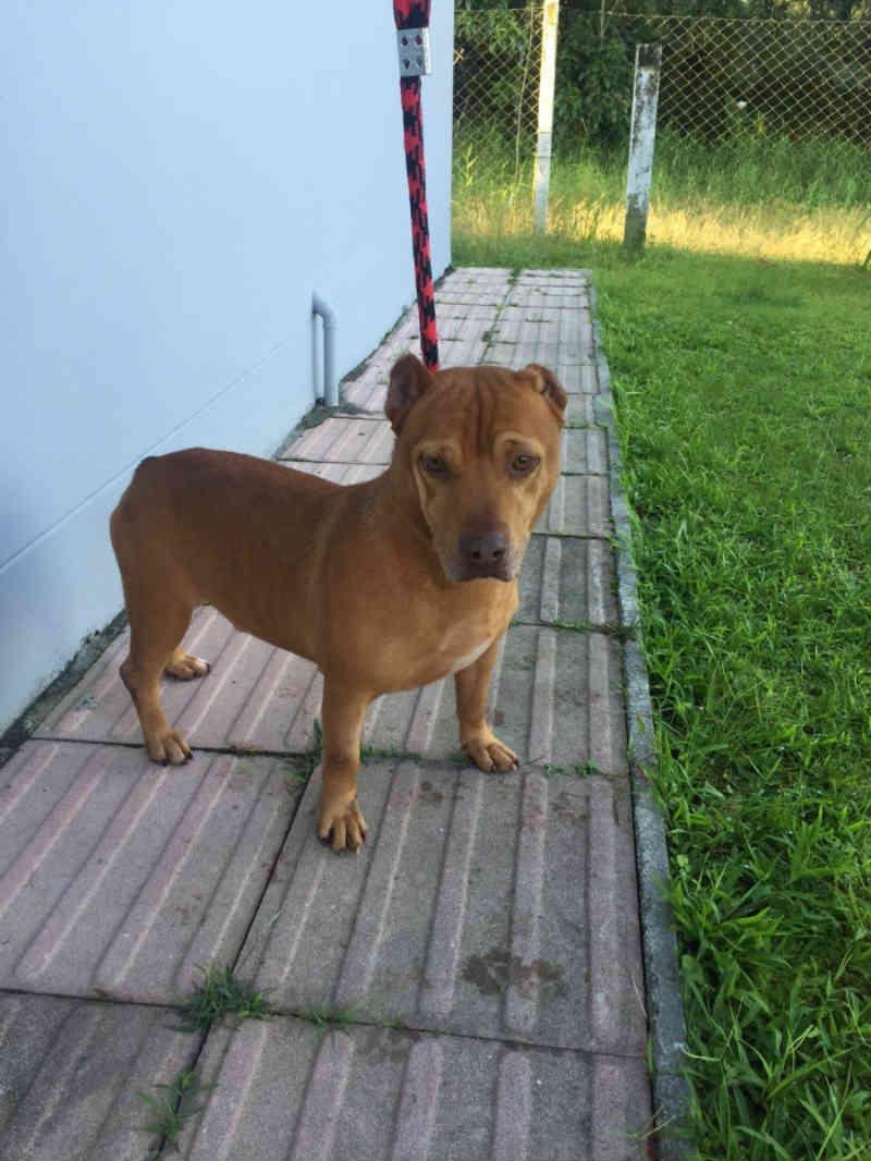 Câmara aprova projeto de lei que beneficia a proteção animal em Joinville, SC