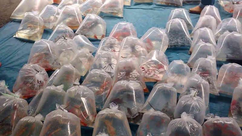 Distribuição de animais vivos como brindes agora é proibida em Joinville, SC