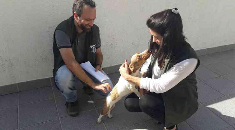 Secretaria de Saúde inicia agendamento de castrações do Censo Animal em Balneário Camboriú, SC