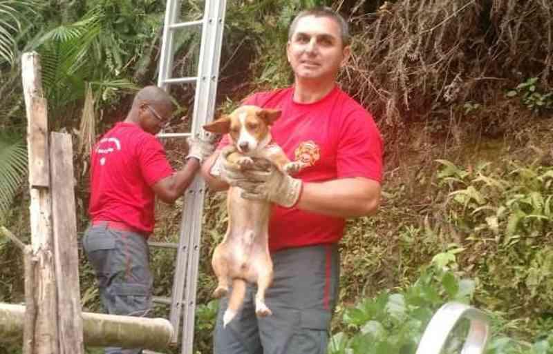Bombeiros resgataram cão que estava em morro(Foto: Bombeiros, Divulgação)