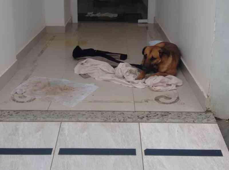 Homem arranca testículos de cachorro em Camboriú, SC