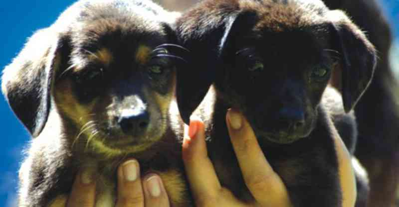 Canil abrirá domingo pra adoção de animais em Itajaí, SC