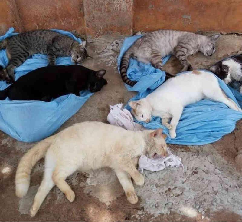 Gatos são encontrados mortos por envenenamento em Araçatuba, SP