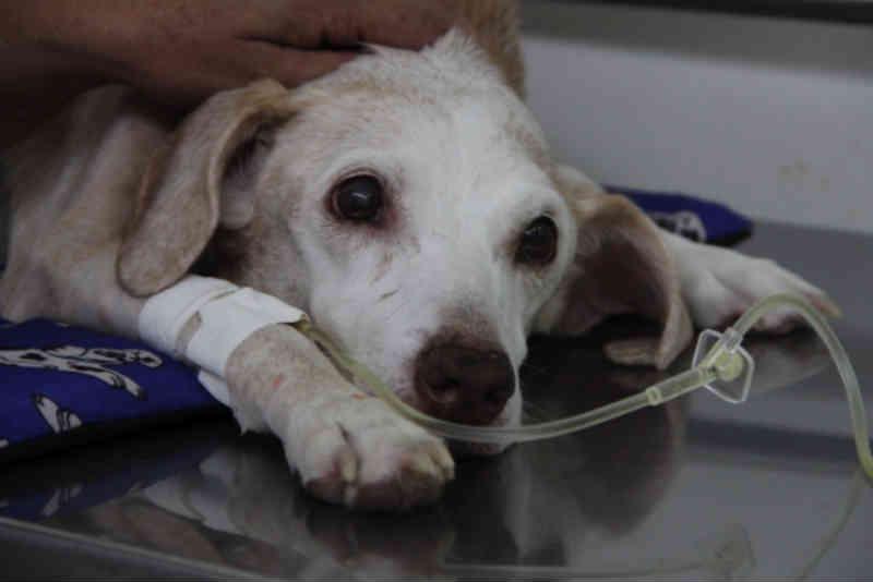 Vereador pede construção de hospital veterinário e pronto-socorro para animais em Artur Nogueira, SP