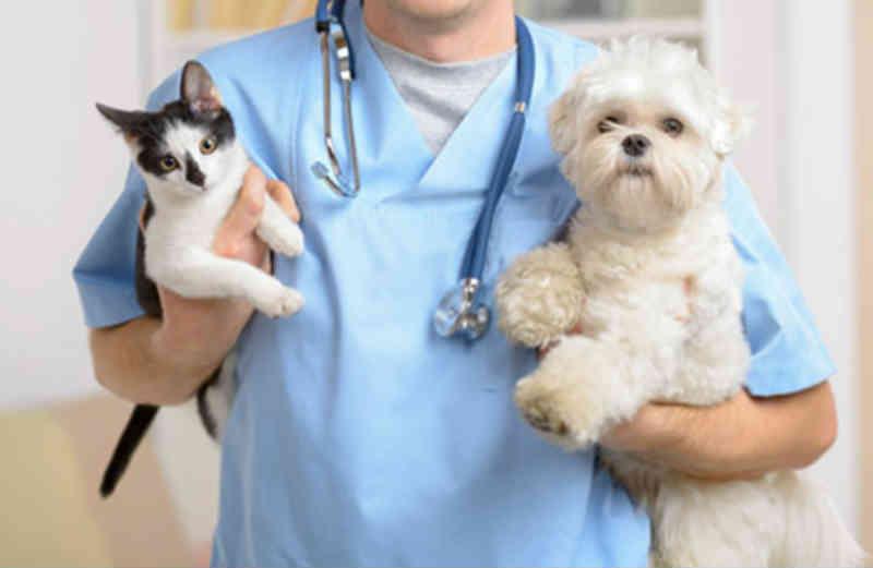 Barueri (SP) oferece veterinário grátis e emissão de RG Animal no dia 21