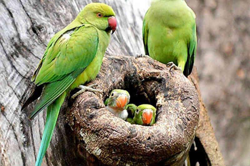 Barueri (SP) alerta para risco da 'resgate e captura' de aves