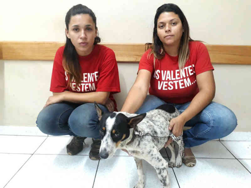 Cão agredido a pedradas pelo tutor em praça de Gália é resgatado por ONG