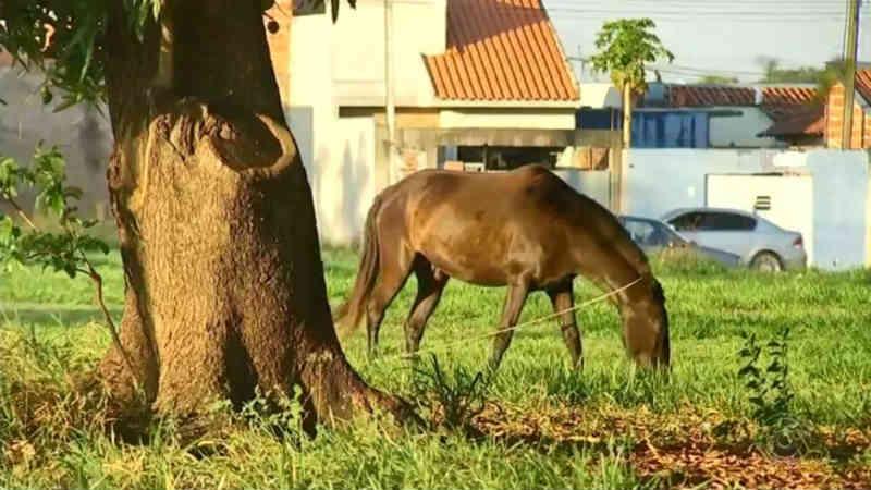 Animais de grande porte soltos em Birigui (SP) receberão microchip com dados do tutor
