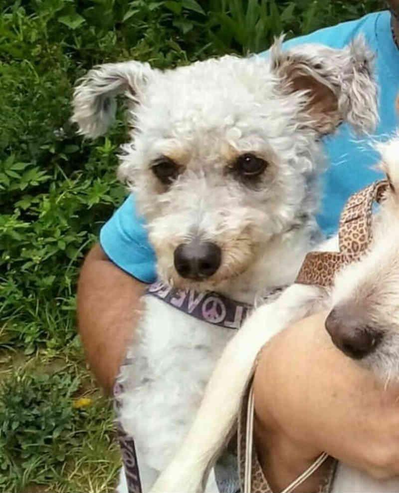 Família oferece recompensa a quem achar cão perdido após acidente em rodovia de SP: 'Nosso filho'