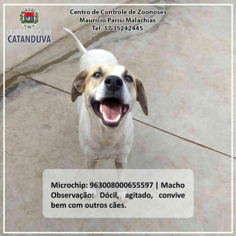 Cães e gatos ganham 'book' para incentivar adoção em Catanduva, SP