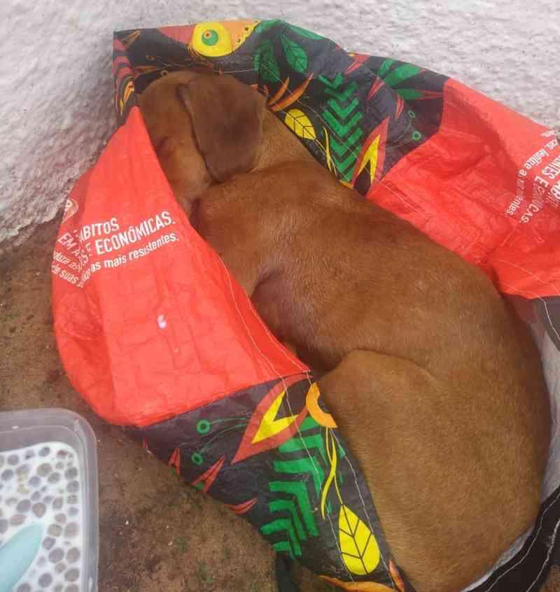 Cachorro se recupera após ser amarrado dentro de sacola: 'Não conseguia mais respirar'
