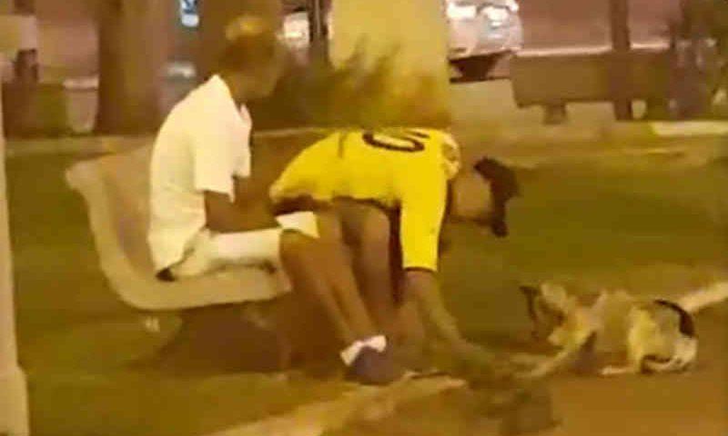 Homem é flagrado agredindo cachorro com pedradas em Gália, SP; vídeo
