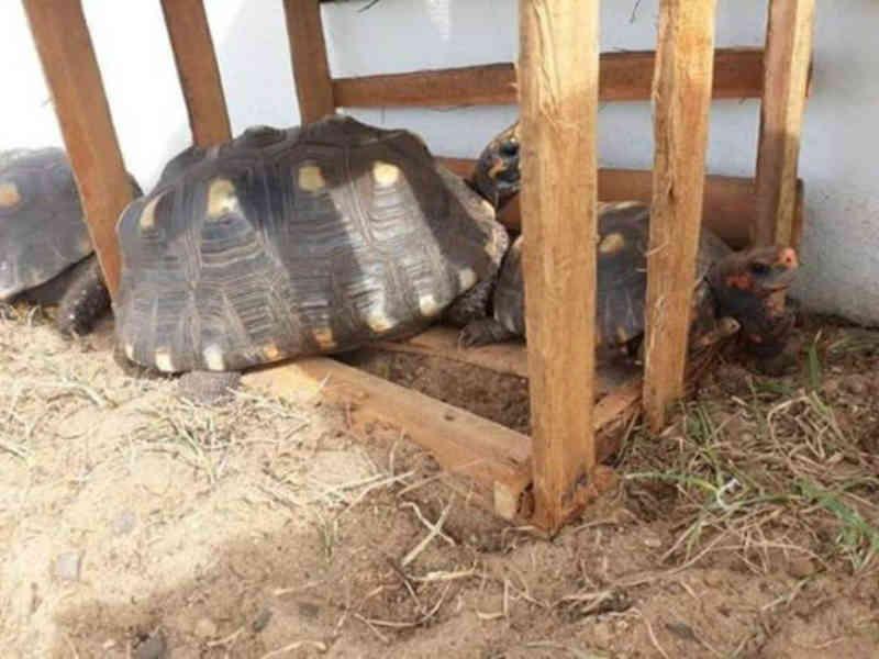 Moradores denunciam maus-tratos de animais nas Termas de Ibirá, no interior de SP