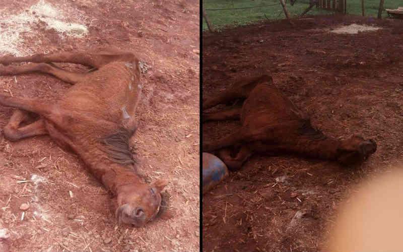 Denúncia nas redes sociais aponta maus-tratos a animais em haras de Ribeirão Preto, SP