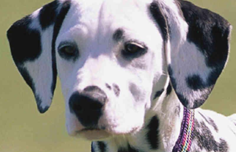 Vizinho mata cachorro e esconde corpo do animal, acusa morador em São Carlos, SP