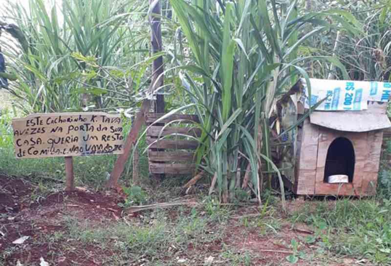 Placa em casinha de cachorro envenenado comove moradores de Assis, SP