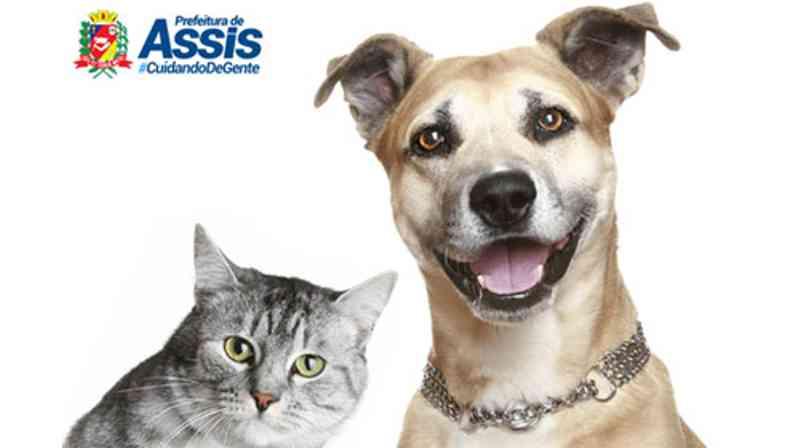 Começou a chamada para castração de animais cadastrados na Prefeitura de Assis, SP
