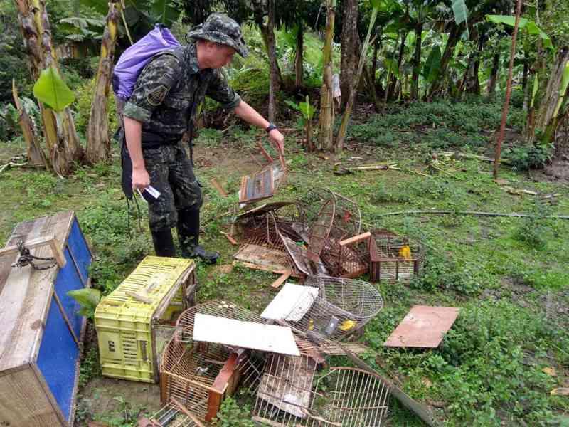 Polícia descobre cativeiro com 43 aves silvestres vítimas de maus-tratos em SP