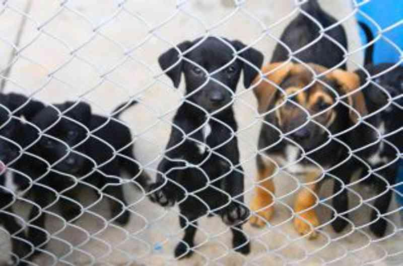 Mauá (SP) lança ações voltadas para animais