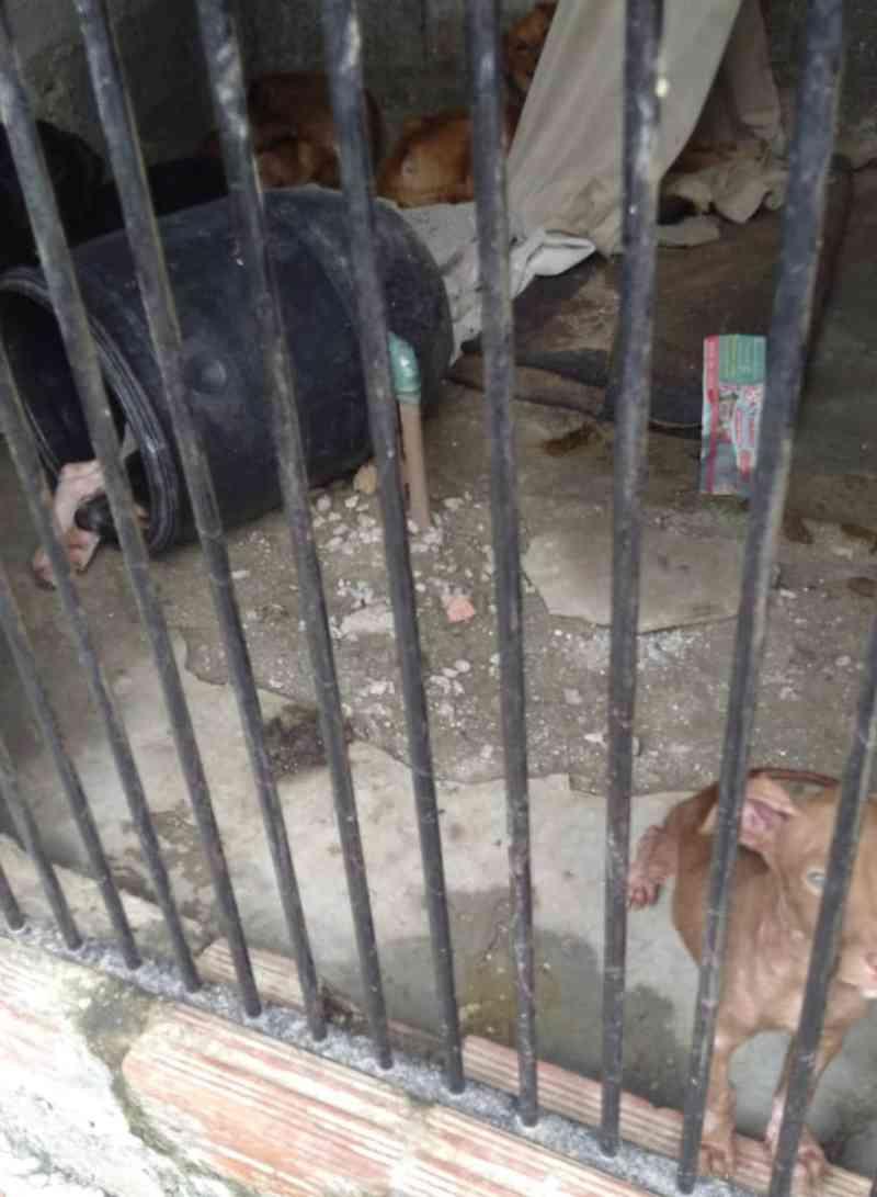 Oito cães vítimas de maus-tratos são resgatados de casa em Mogi das Cruzes, SP