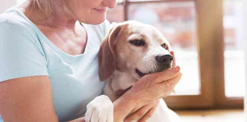 Hospital veterinário realiza exame gratuito em cães e gatos em Santos, SP
