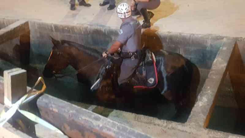 Megaoperação salva cavalo que caiu em canal após ponte ceder em SP; vídeo