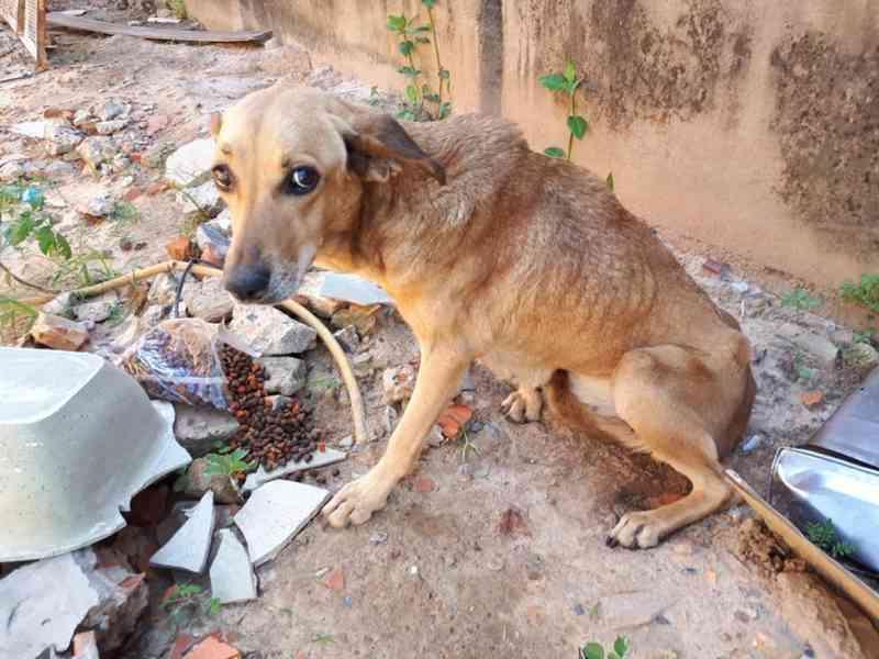 Cachorro abandonado há 15 dias é resgatado de casa em Sorocaba, SP