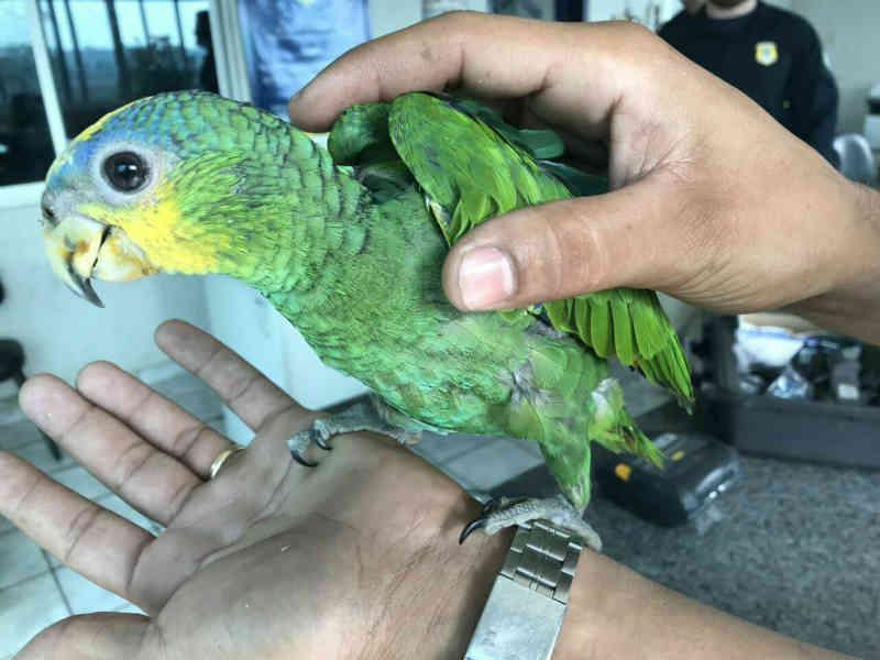 Homem resgata papagaio vítima de maus-tratos às margens da BR-153 em Tocantins