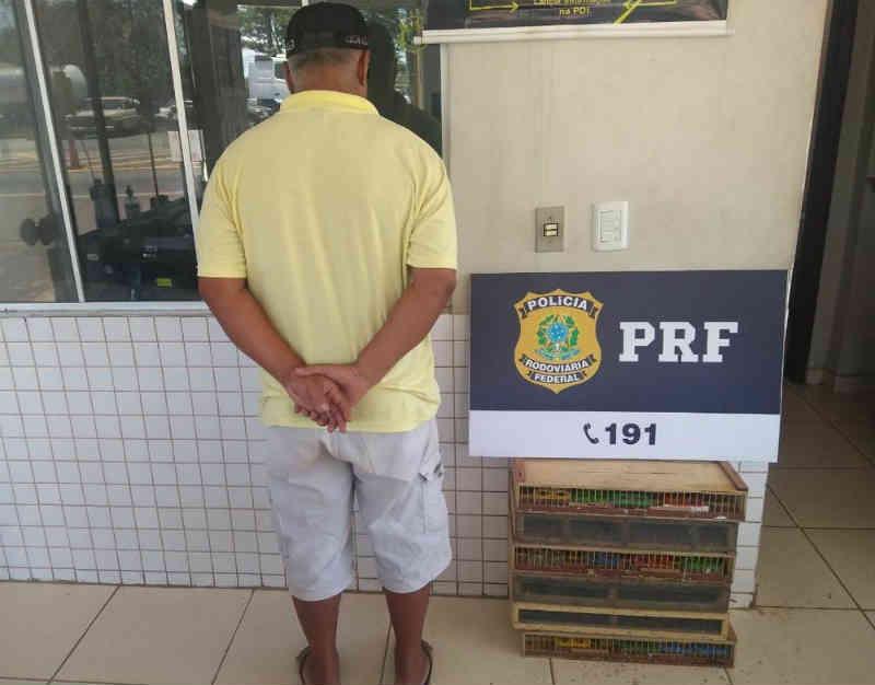 Homem é multado em R$ 85 mil e 170 pássaros são apreendidos em Guaraí, TO