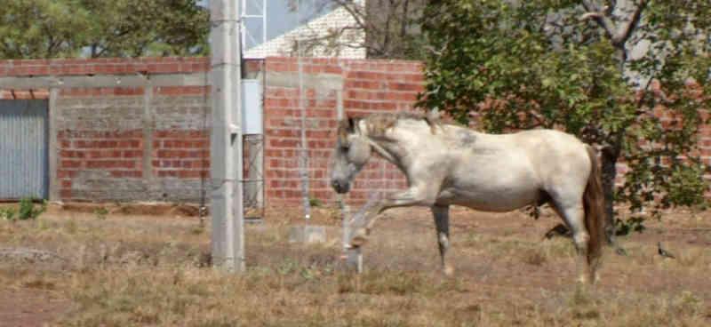 Cavalo é flagrado quebrando cano para beber água em bairro de Luzimangues, Porto Nacional (TO); veja vídeo