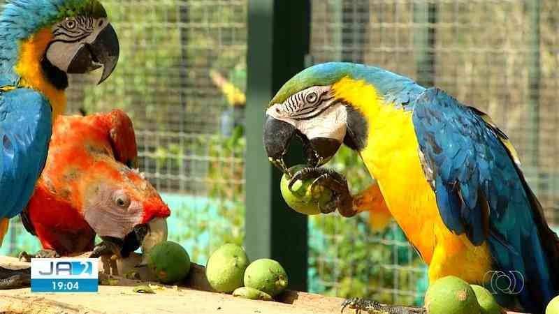 Aves silvestres vítimas de tráfico ganham liberdade após um ano em reabilitação