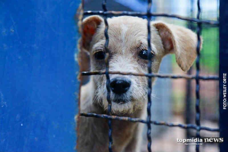 Enquete: 63% dos leitores preferem adotar um animal