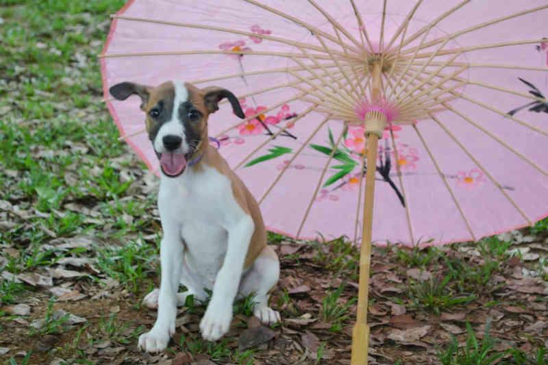 Estudante faz ensaio fotográfico com cães doados por vizinha para incentivar adoção em Rio Branco, AC
